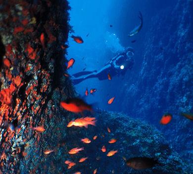 diving_